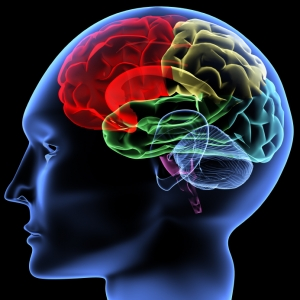 Brain3-300x300
